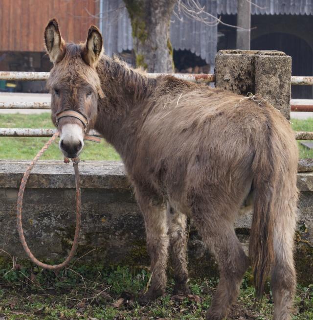 DIDOU - âne né en 2008  - adopté en mars 2011 par Comtois&co - Page 3 Dsc00715