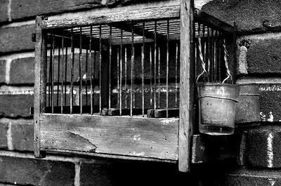 les vieux cages pour le chant des malinois  Velhag10