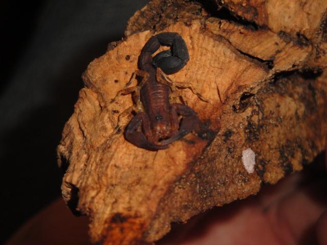 Envyizm's scorpion pictures Dsc04210