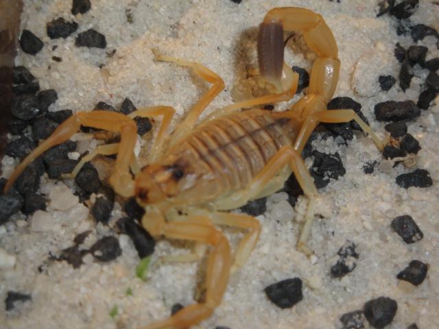 Envyizm's scorpion pictures Dsc04212