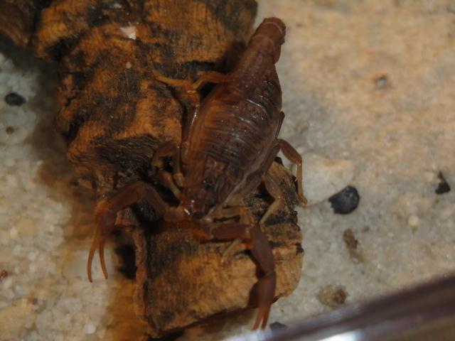 Envyizm's scorpion pictures Dsc04213
