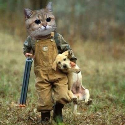 La chasse est ouverte... 11464410
