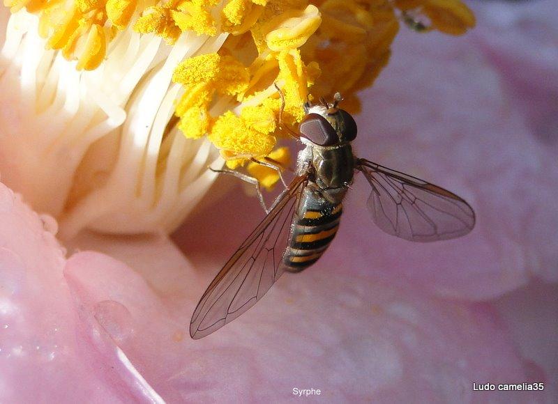Quelques macros d'insectes Dsc03510