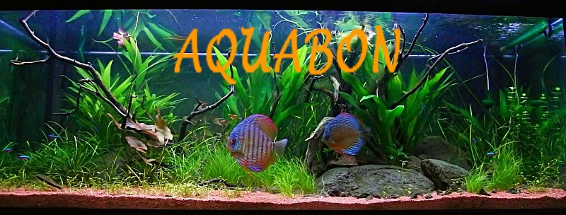 aquabon