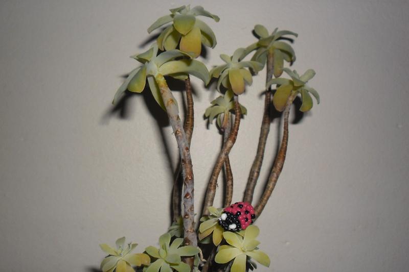 Qui connait cette plante [A dleplacer svp ] Sam_0810
