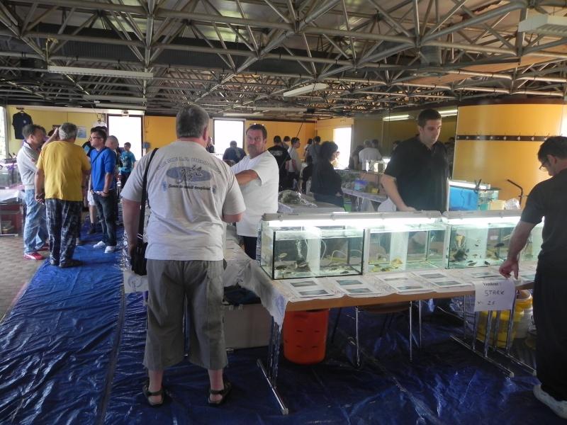 Bourse aux poissons - Loupershouse - 1er septembre 2013 - Page 2 Dscn9830