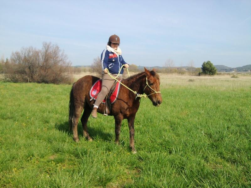 (Dpt 23) UTO, poney 4 ans, réservé par wakan11 !!!!!!!!!!!!!!!! (Déc 2011) - Page 4 Photo048
