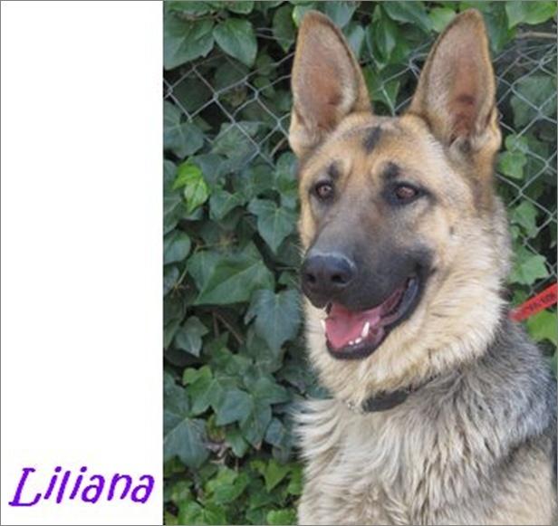 LILIANA - MAGNIFIQUE BA - FEVRIER 2012 Image112