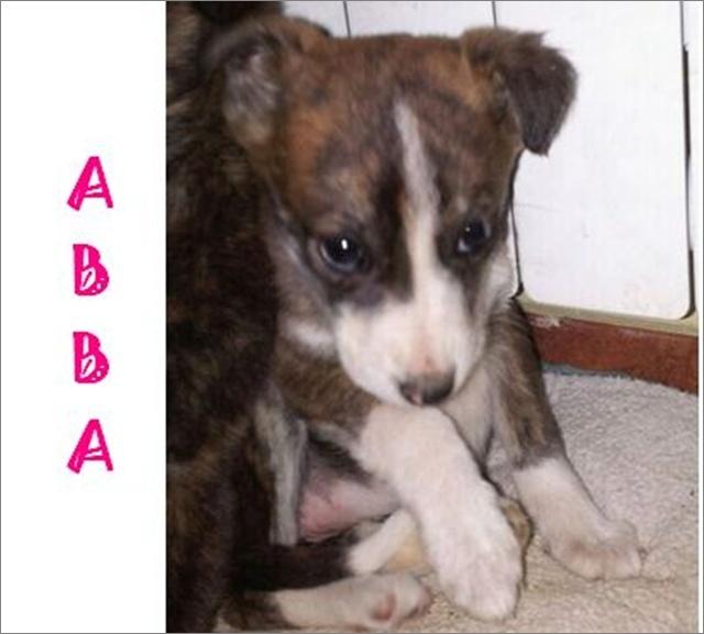 ABBA - CROISEE GALGA - prise en charge par une autre asso Image136