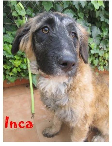 INCA - UN REGARD SI DOUX Image512