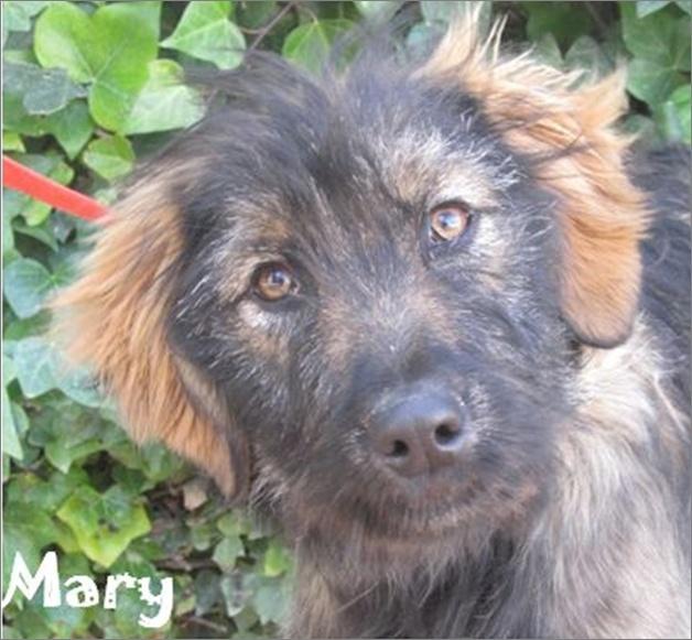 MARY - UN SI JOLIE PRENOM Image613