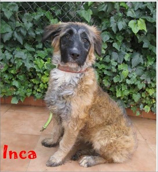 INCA - UN REGARD SI DOUX Image810