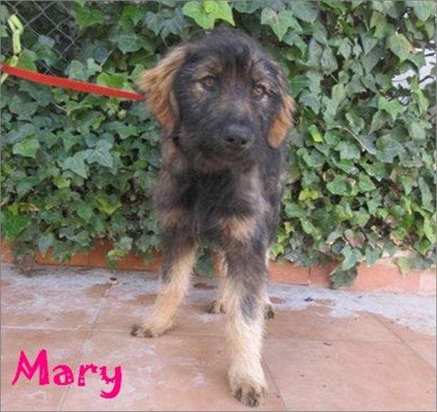 MARY - UN SI JOLIE PRENOM Image811