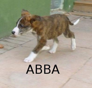 ABBA - CROISEE GALGA - prise en charge par une autre asso P1040511