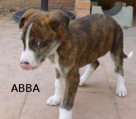 ABBA - CROISEE GALGA - prise en charge par une autre asso P1040512