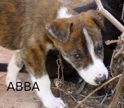 ABBA - CROISEE GALGA - prise en charge par une autre asso P1040514