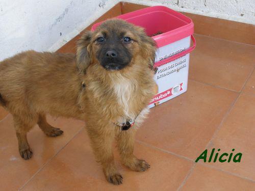 ALICIA - TRES JOUEUSE P1302015