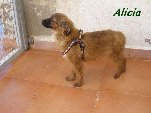 ALICIA - TRES JOUEUSE P1302016