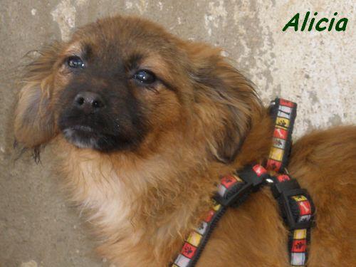 ALICIA - TRES JOUEUSE P1302017