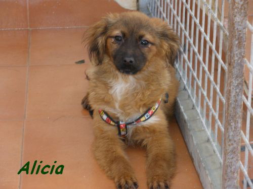 ALICIA - TRES JOUEUSE P1302018