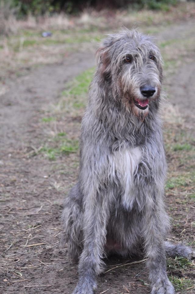 Qu'elle est le nom de vos/votre chien? Et Pourquoi? - Page 2 Dsc_0010