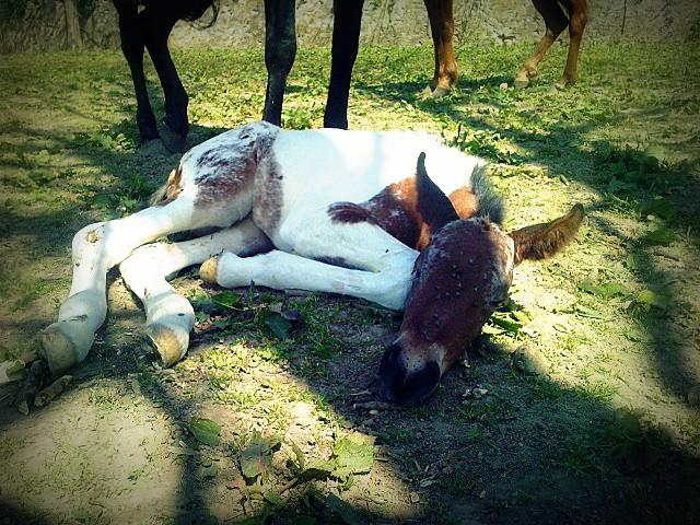 CONCOURS PHOTO : Les chevaux paresseux... P2704110