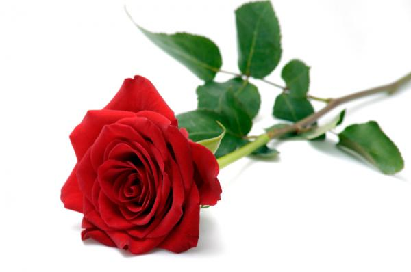 Happy Valentines!!! Valent10
