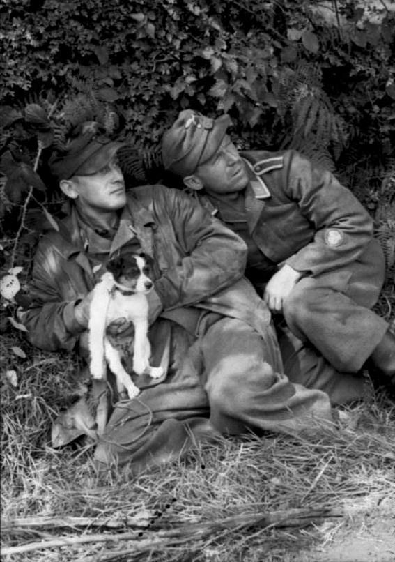 Les troupes de la Luftwaffe en Normandie 500bb10