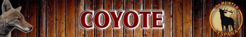 TOP 5 Coyote // Coyote Coyote15