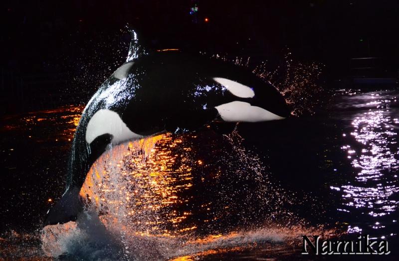 [Photos] Les Plus Belles Photos d'Orques Ooo10
