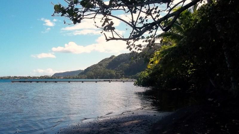 Un petit bout de Polynésie 100_1012