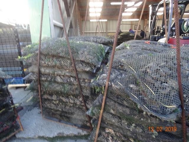 Les cabanes à huîtres Dsc00175
