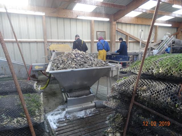 Les cabanes à huîtres Dsc00176