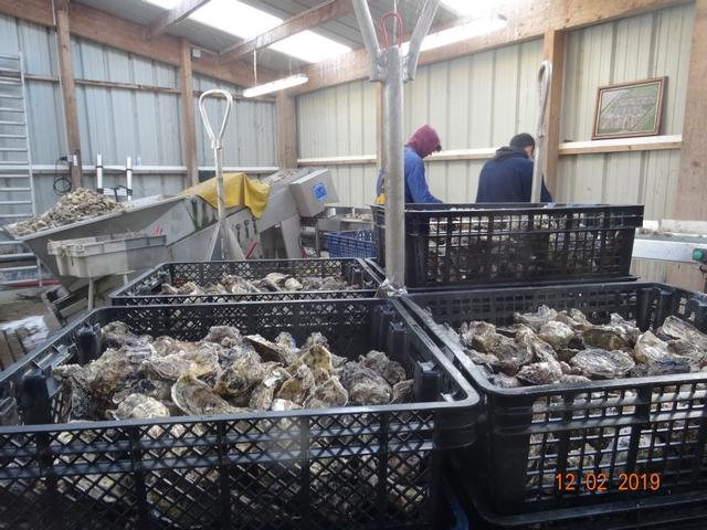 Les cabanes à huîtres Dsc00177