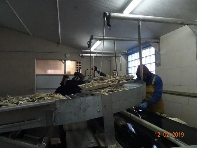 Les cabanes à huîtres Dsc00179