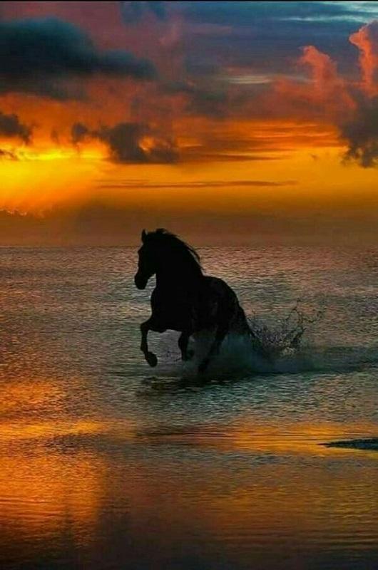 Concours le plus beau coucher de soleil E6319c10
