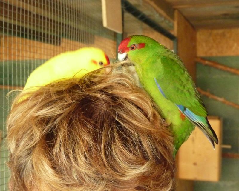 Mes apprentis coiffeur... P1150510