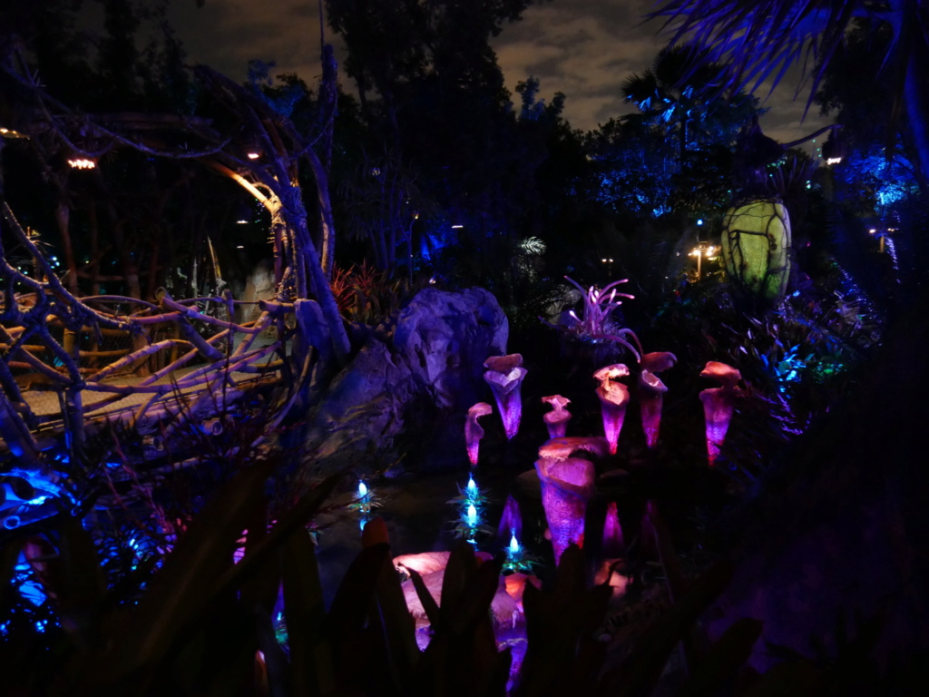 [Pré-TR] Voyage solo à Orlando - Halloween 2019 - Page 4 P1100011
