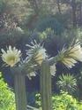 jardins a visiter vers la cote basque 20130813