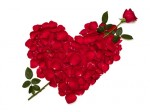 St Valentin de Michael ! Rose_c10
