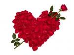 St Valentin de Michael ! Rose_c11