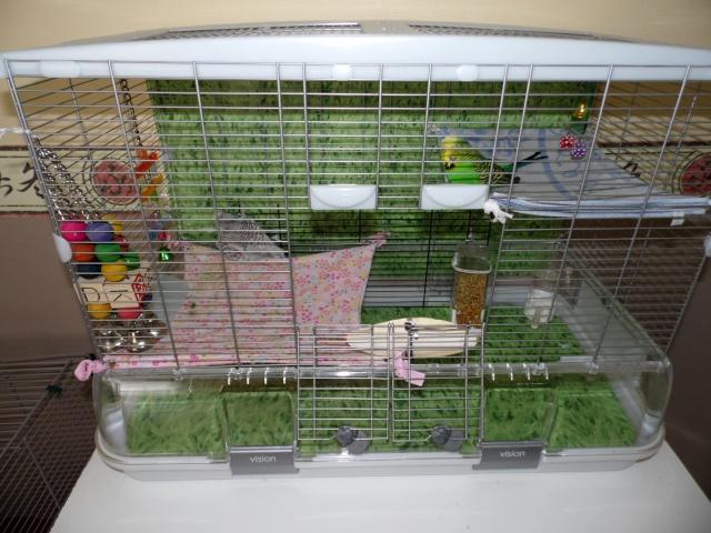 Les installations de vos oiseaux Sam_0019
