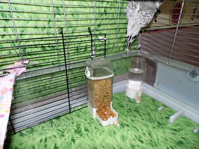Les installations de vos oiseaux Sam_0020