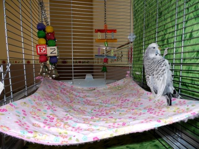 Les installations de vos oiseaux Sam_0021