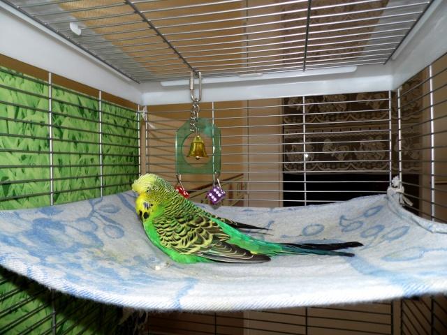 Les installations de vos oiseaux Sam_0022
