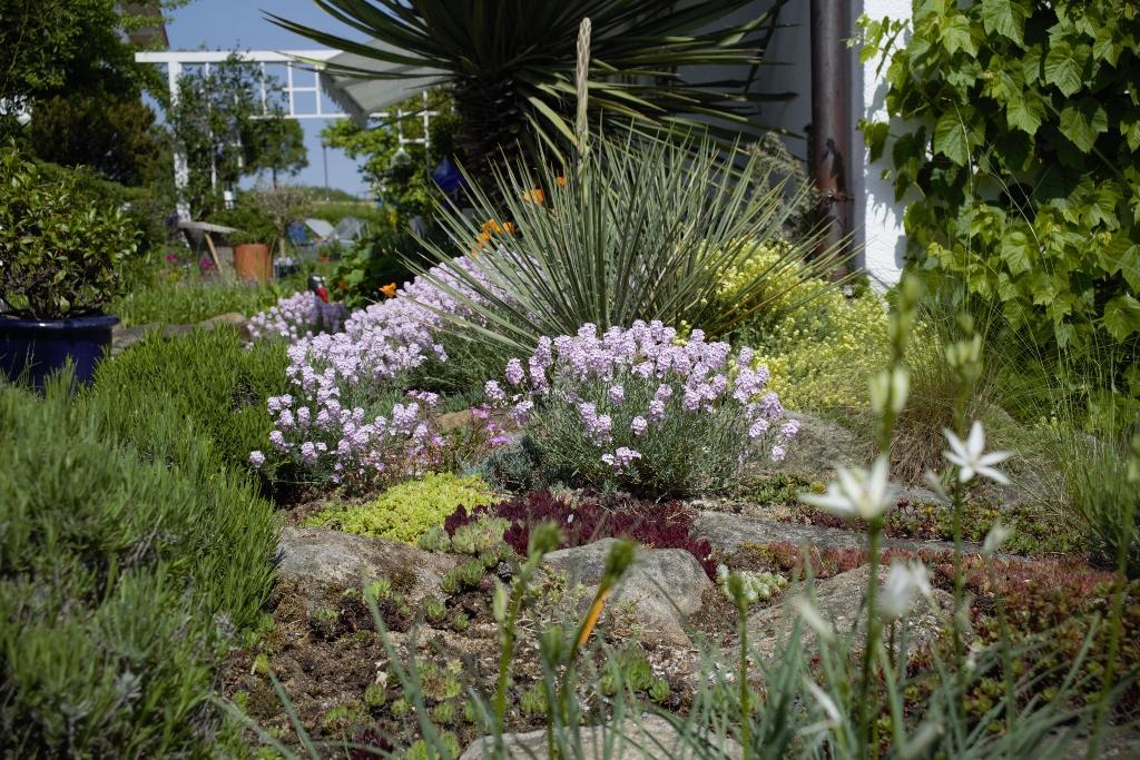 Hang- und Steingartenpflanzen - Seite 33 Bc9a2918