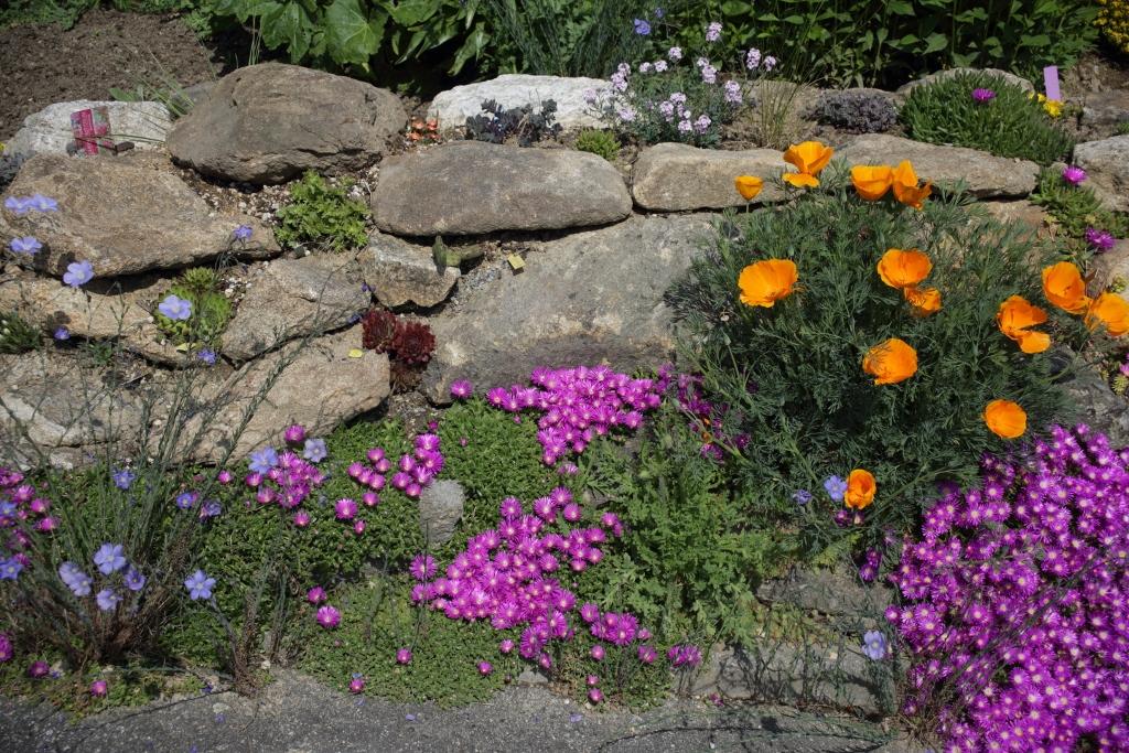 Hang- und Steingartenpflanzen - Seite 33 Bc9a2920