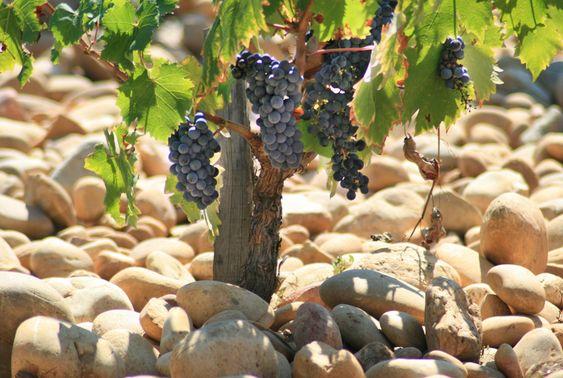 Les vignes de mon pays 0360de10
