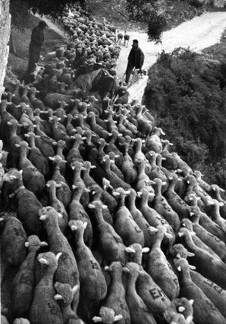 Les bergers d'antan et d'aujourd'hui 1592ed10