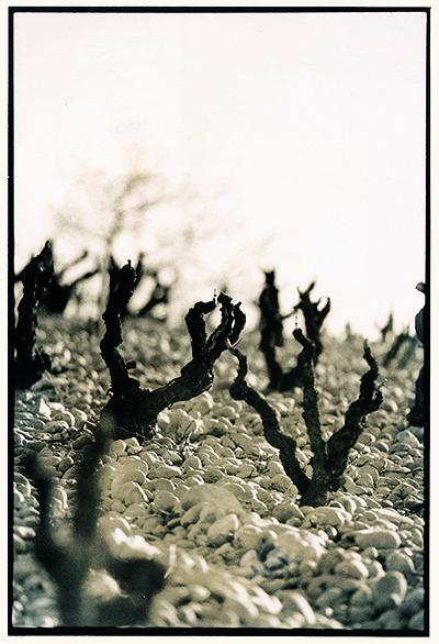 Les vignes de mon pays 1bc70810